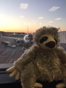 Novella the Sloth