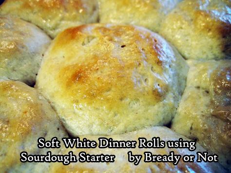Soft White Dinner Rolls using Sourdough Starter